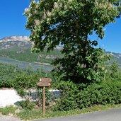 D-0093-radweg-kaltern-ueberetscher-spazierweg.jpg