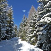 D-6481-avignatal-winter-neuschnee-auf-baeumen.jpg