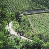 D-Frangart-Radweg-Weinreben-Radfahrer-IMG_0865.jpg