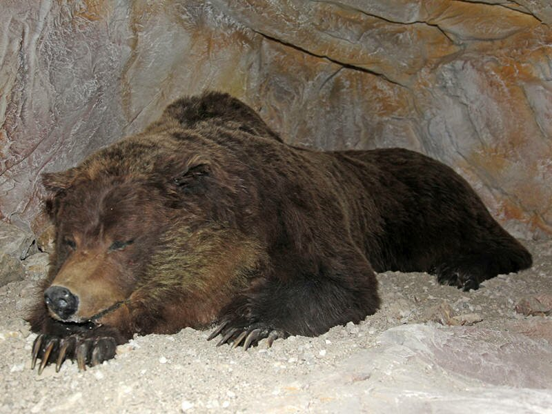 "Search Results for ""Brown Bear In Cave"" – Calendar 2015"